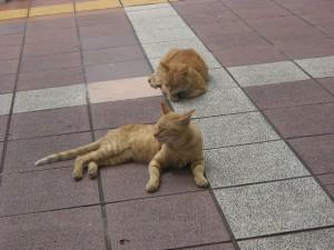 猫2匹の写真
