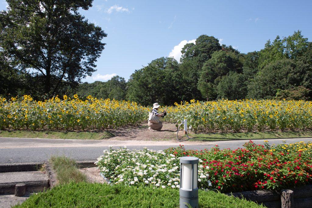 広島市植物公園 ひまわり