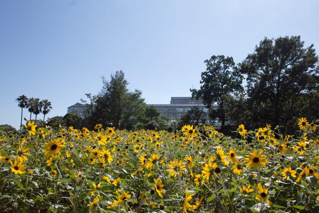 広島市植物公園 大温室とひまわり